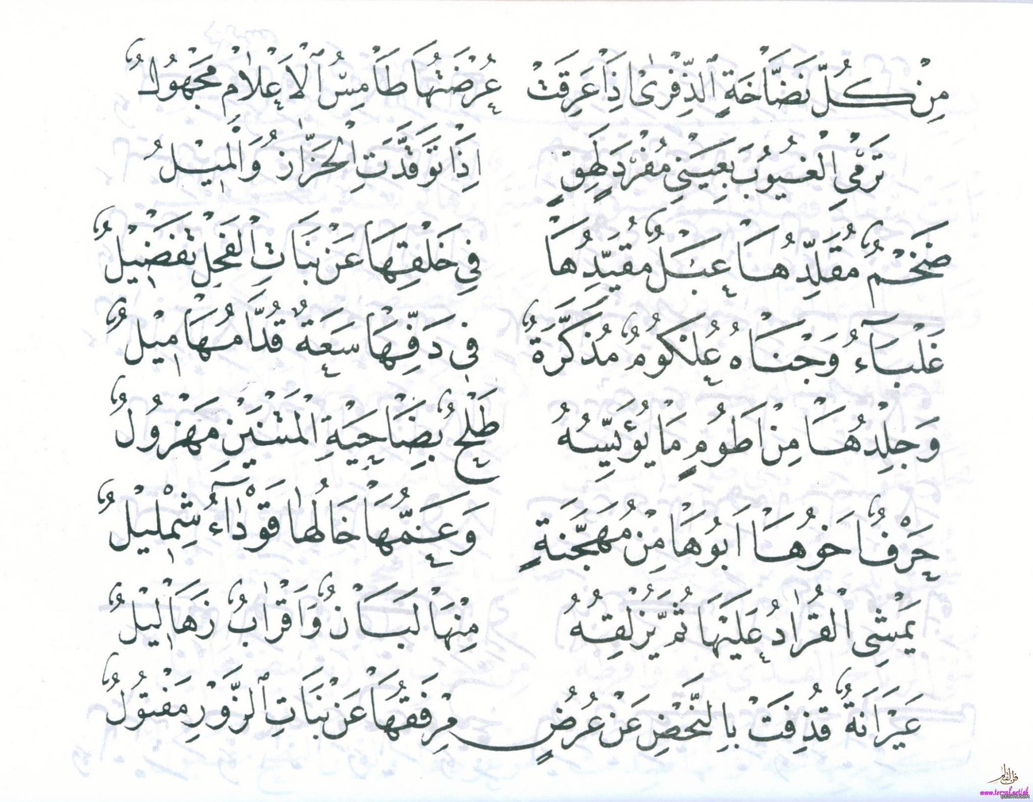 قصيدة بانت سعاد لكعب بن زهير رضي الله عنه بخط مصطفى حليم 5