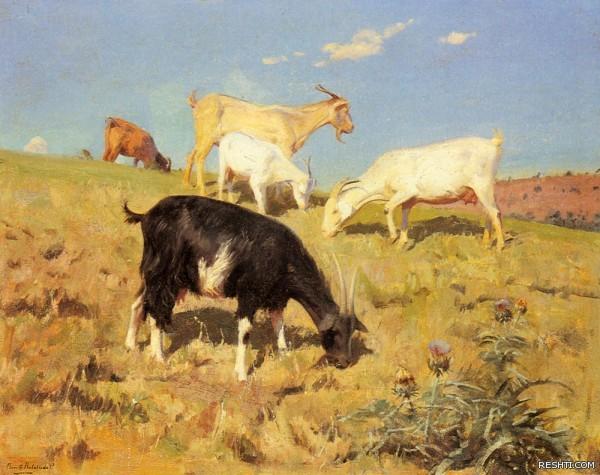 Correa Benito Rebolledo Goats Grazing On A Hillside
